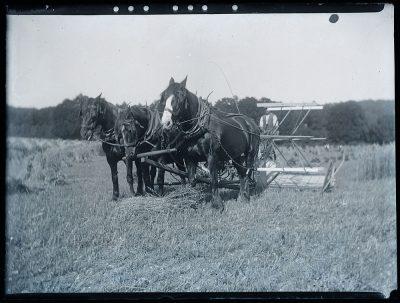 horse-drawn reaper in a field